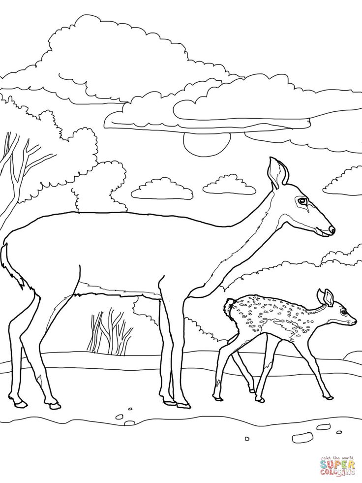 animal tails coloring pages 11 best cute baby elephant coloring pages images on coloring pages animal tails