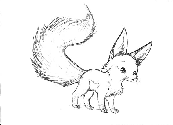 animal tails coloring pages baby fox coloring pages at getcoloringscom free pages tails coloring animal