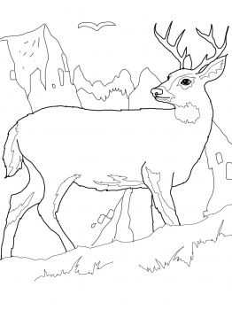 animal tails coloring pages white tail deer coloring page coloring pages to print tails pages animal coloring