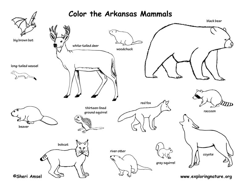 arkansas coloring pages arkansas state tree coloring page free printable coloring arkansas pages