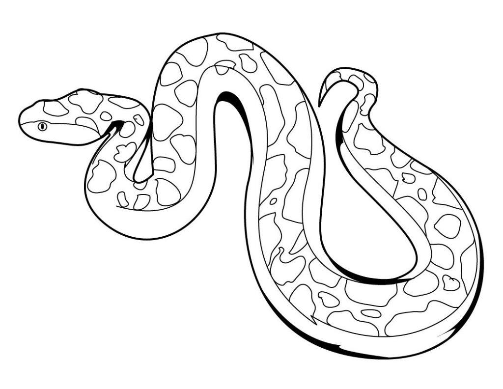 boa constrictor coloring page cute boa coloring page free printable coloring pages page constrictor coloring boa