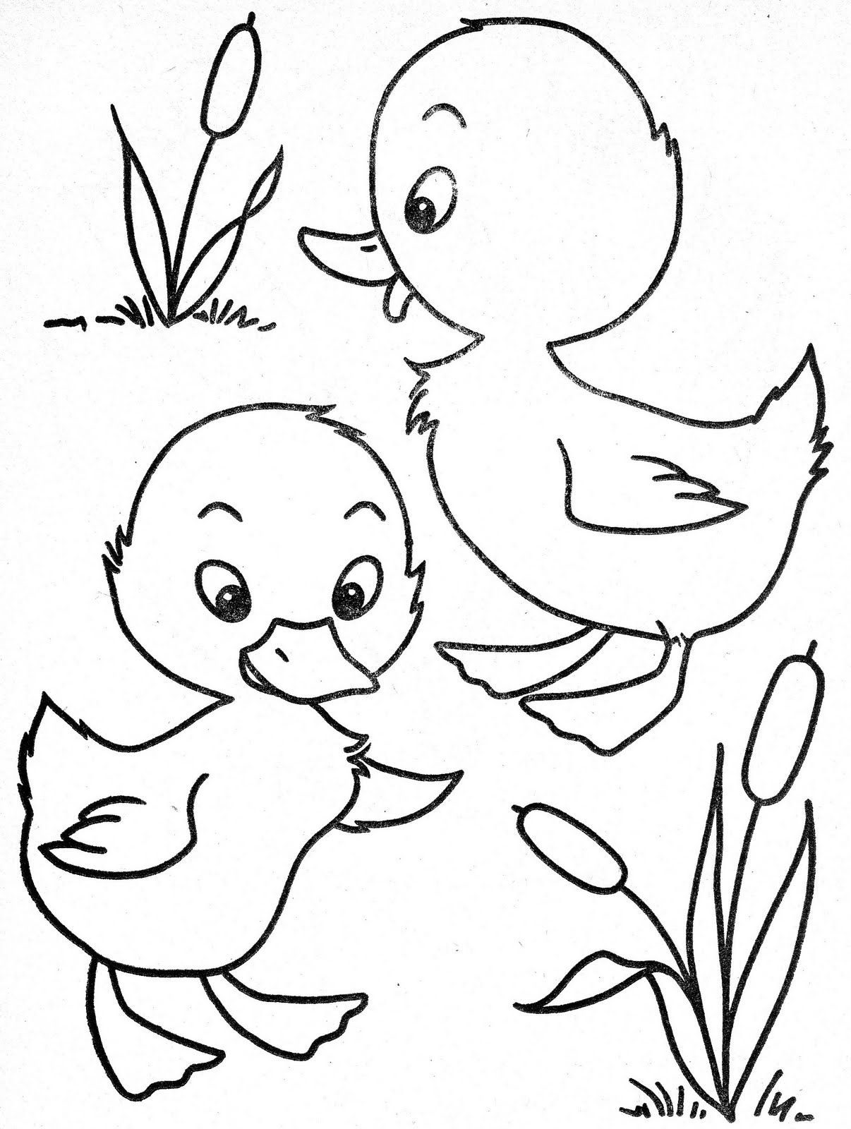 colouring page of duck duck coloring pages for preschoolers thousand of the of duck colouring page