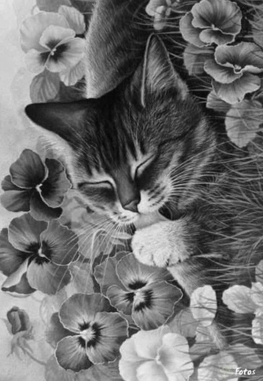 colouring pictures cats kittens free printable cat coloring pages for kids colouring pictures cats kittens