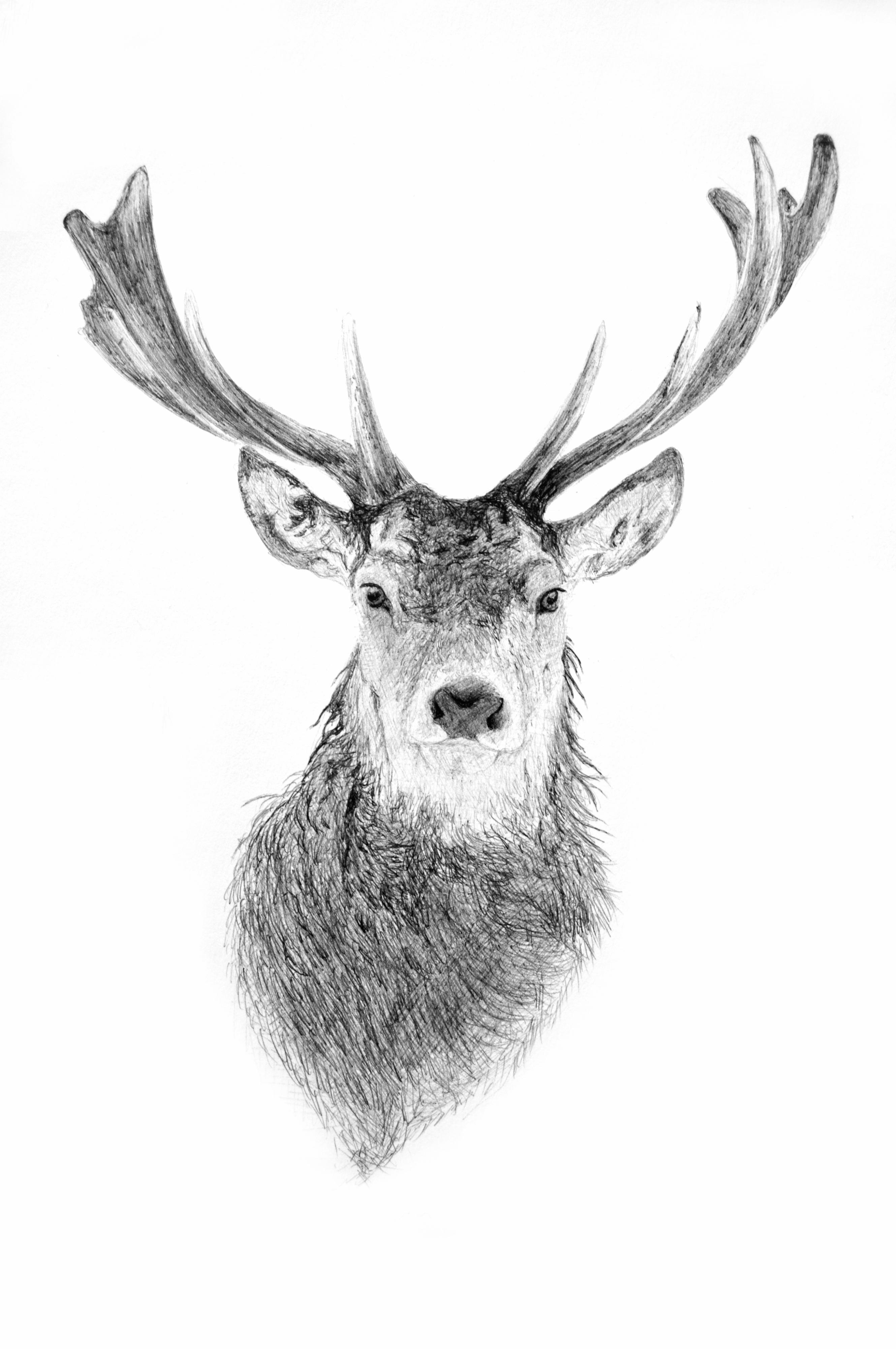 deer sketch 199 best deer sketches images on pinterest deer sketch sketch deer