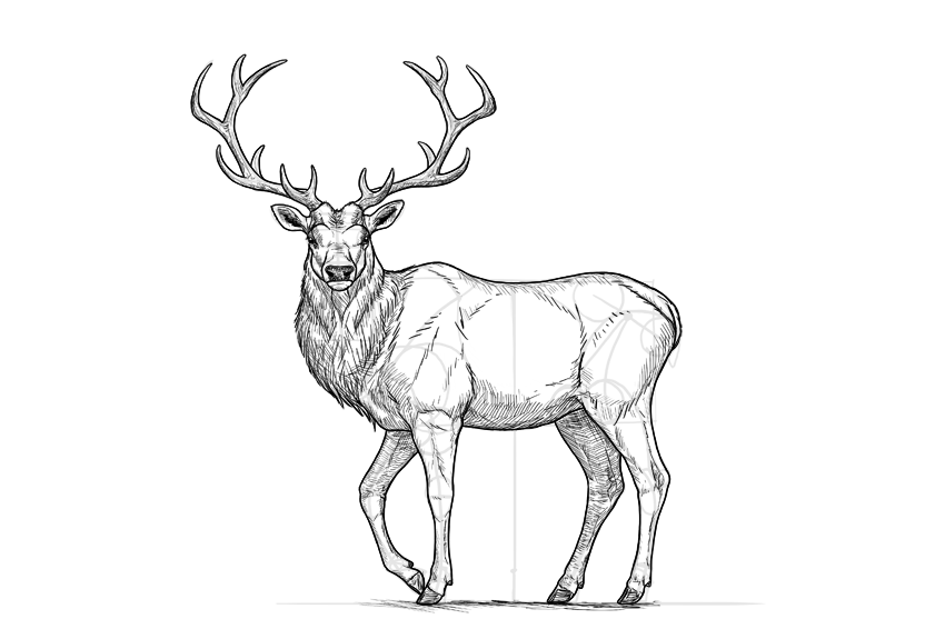 deer sketch 24 free deer drawings designs free premium templates sketch deer