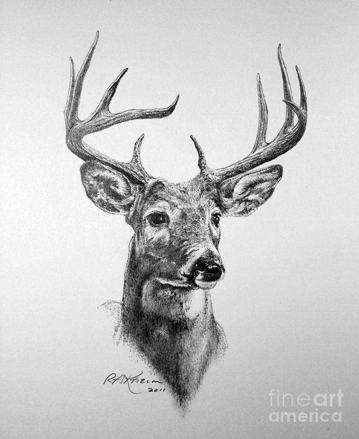 deer sketch 25 free deer drawings designs free premium sketch deer
