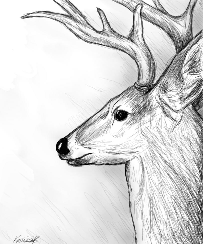 deer sketch autumn buck drawing by jimmy wood sketch deer