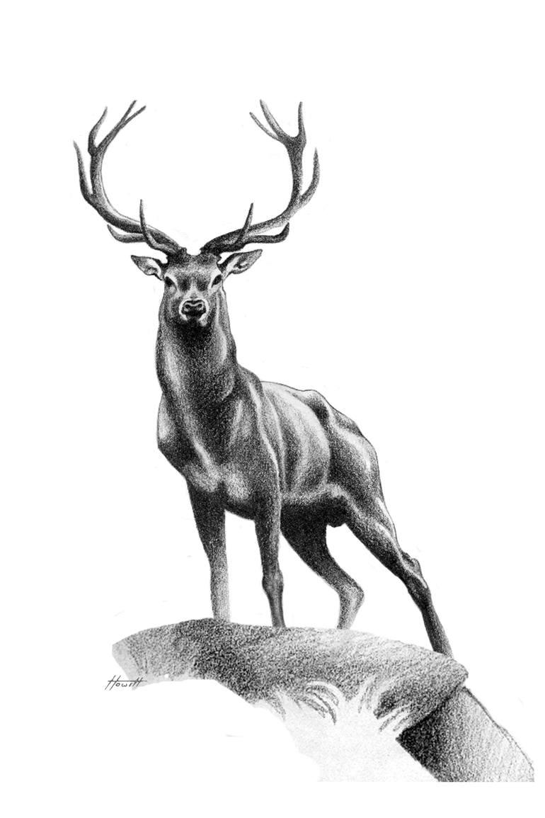 deer sketch buck deer drawing by roy anthony kaelin deer sketch