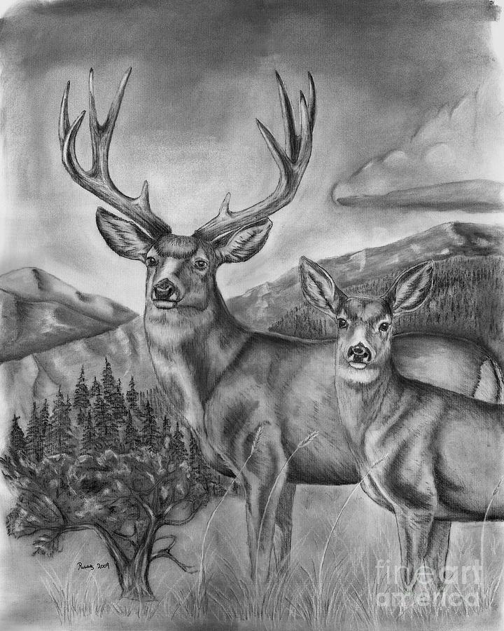 deer sketch cartoon coloring pages animals coloringsnet deer sketch