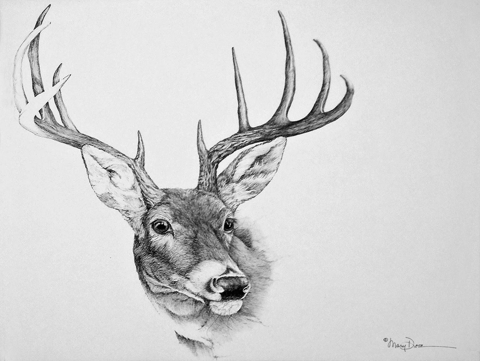 deer sketch deer drawing amazing wallpapers sketch deer