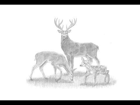 deer sketch deer head by tydoughty on deviantart sketch deer