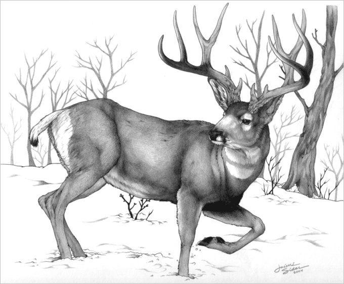 deer sketch deer sketch by ilartist on deviantart sketch deer
