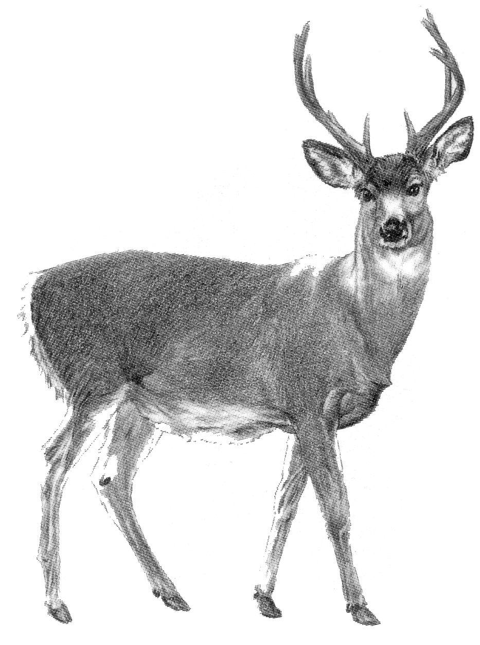 deer sketch deer sketch by katieraff on deviantart deer sketch