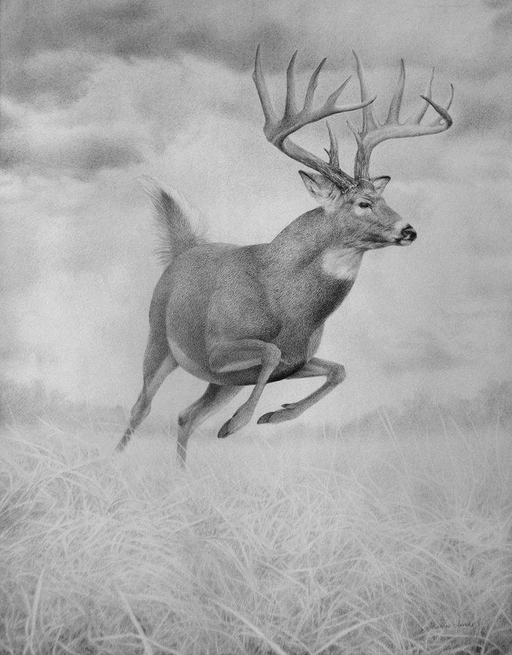 deer sketch deer sketch sketch deer
