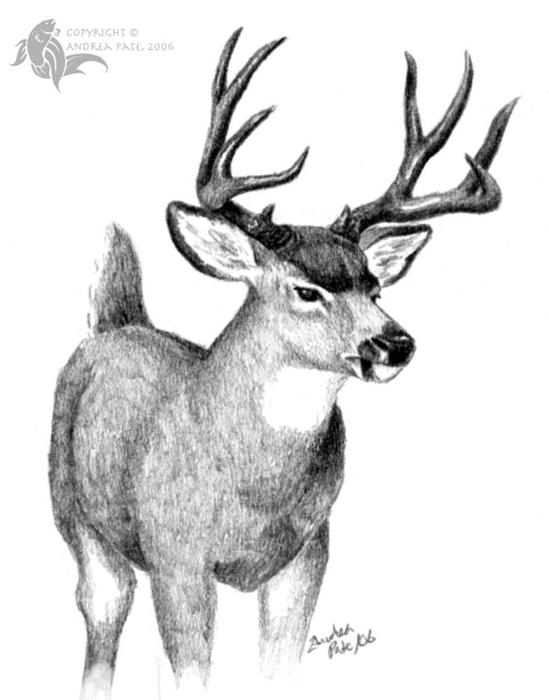 deer sketch how to draw a deer step by step deer sketch