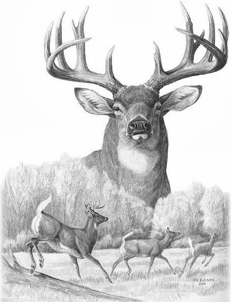 deer sketch illinois whitetail services llc pencil drawing gallery sketch deer