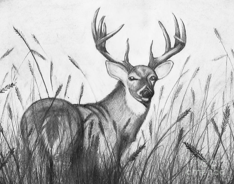 deer sketch martin wittig deer sketches finally new art right sketch deer