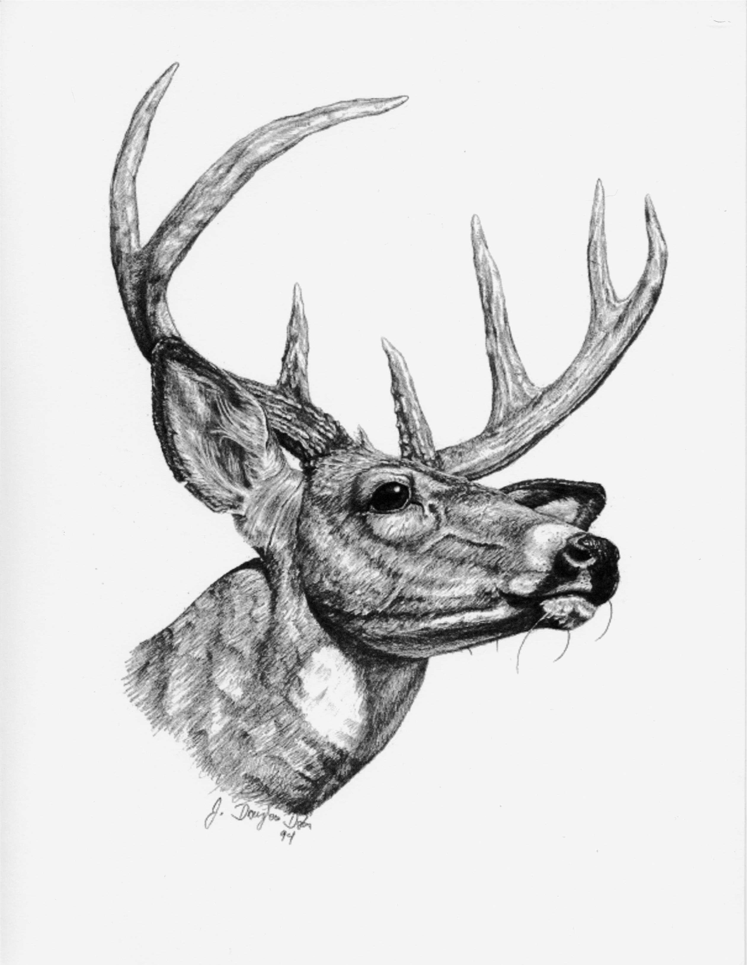 deer sketch mule deer by sesroh on deviantart sketch deer
