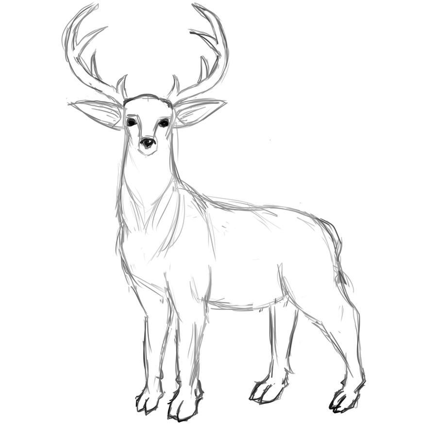 deer sketch north american nobility mule deer drawing by laurie mcginley sketch deer