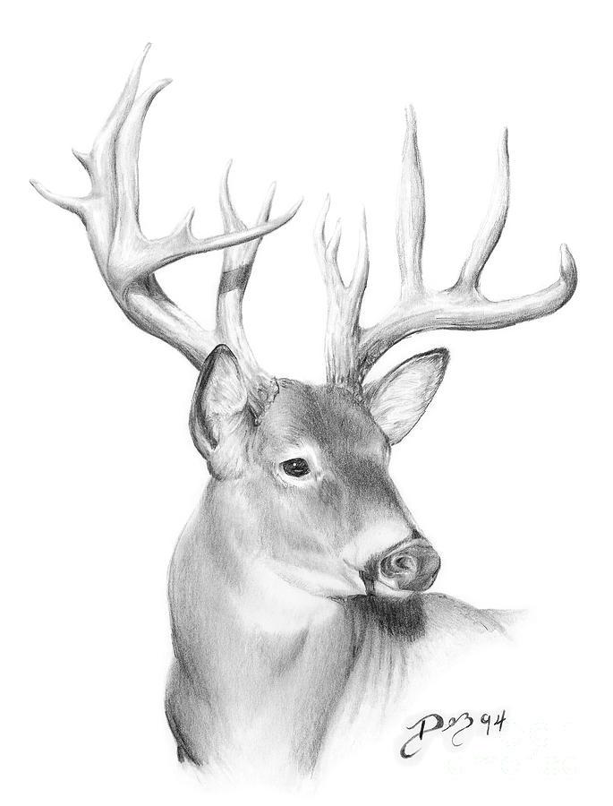 deer sketch special deer family drawing youtube sketch deer