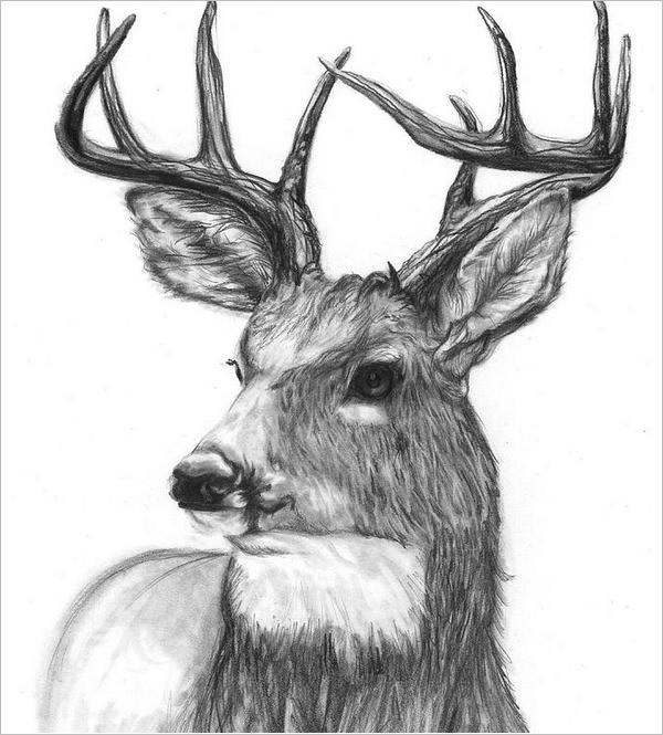 deer sketch the story of the dear hunter theruine sketch deer
