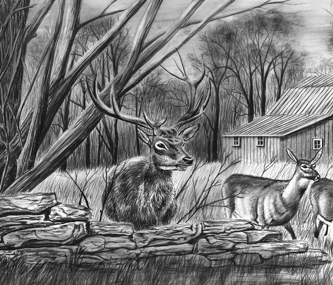 deer sketch the world39s best photos of pencil and whitetail flickr sketch deer