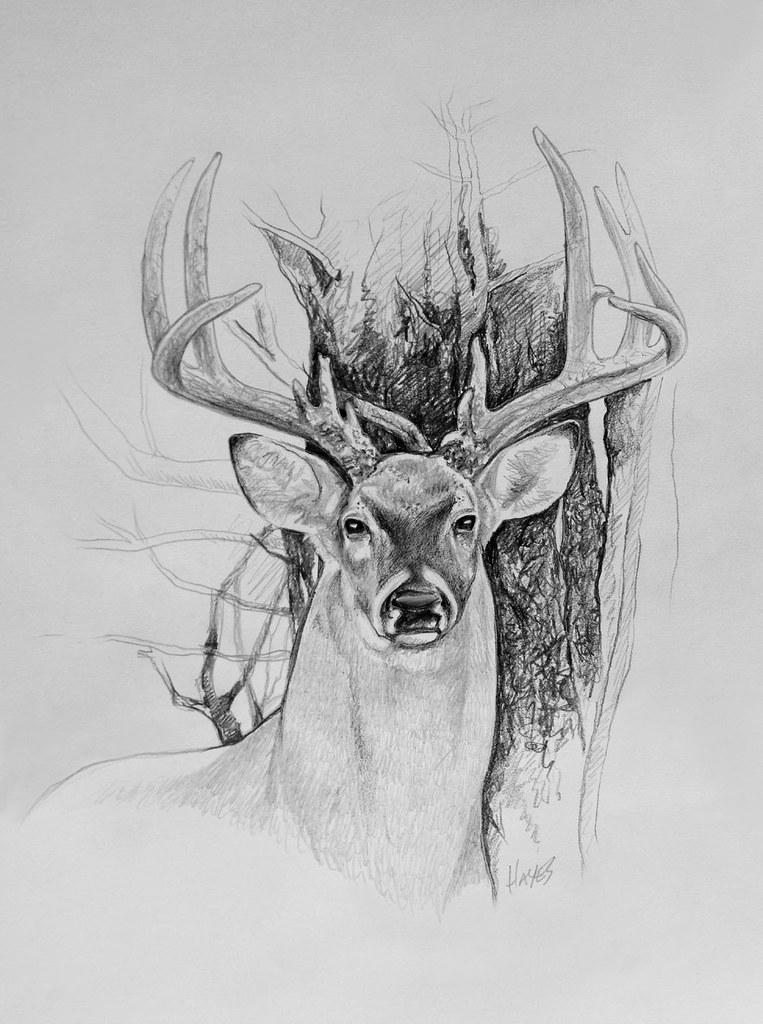 deer sketch whitetail deer drawing by larry dez dismang deer sketch