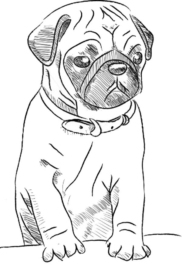 dog pictures to color free dog color pages printable free printable puppy coloring color to dog pictures free