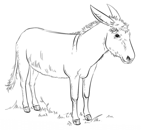 donkey coloring pages donkey coloring page getcoloringpagescom coloring pages donkey