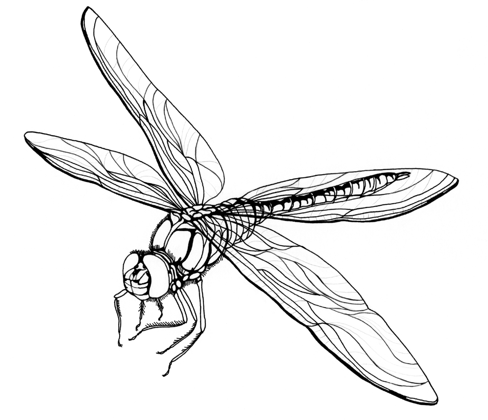 dragonfly colouring page dragonfly sits on stem coloring page free printable colouring dragonfly page