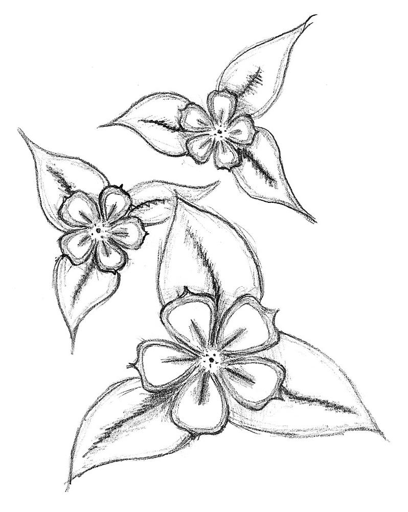 easy plants to draw 61 best draw flowers images flowers drawings pencil easy draw plants to