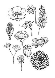 easy plants to draw filecoa illustration elements plants tobacco leavessvg to plants easy draw