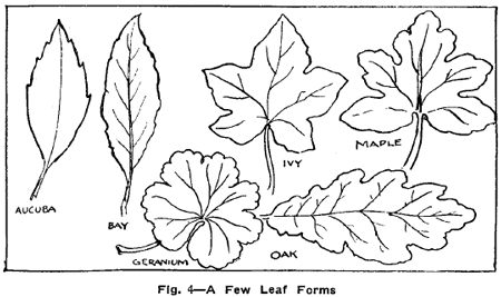 easy plants to draw how to draw cartoon flowers plants to draw easy