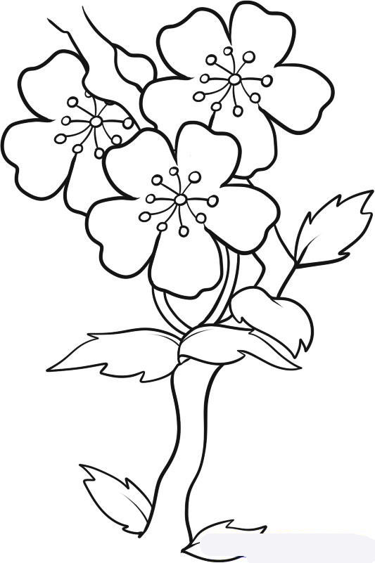 easy plants to draw learn how to draw plant in pot plants for kids step by draw easy plants to