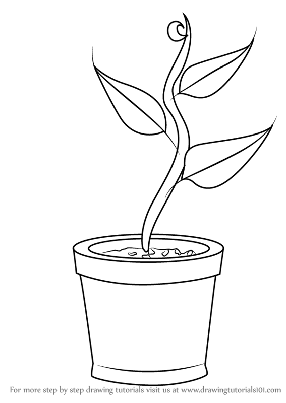 easy plants to draw nicole illustration flower power draw easy to plants