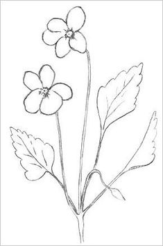 easy plants to draw tobacco plant left to my own devices pinterest easy plants to draw