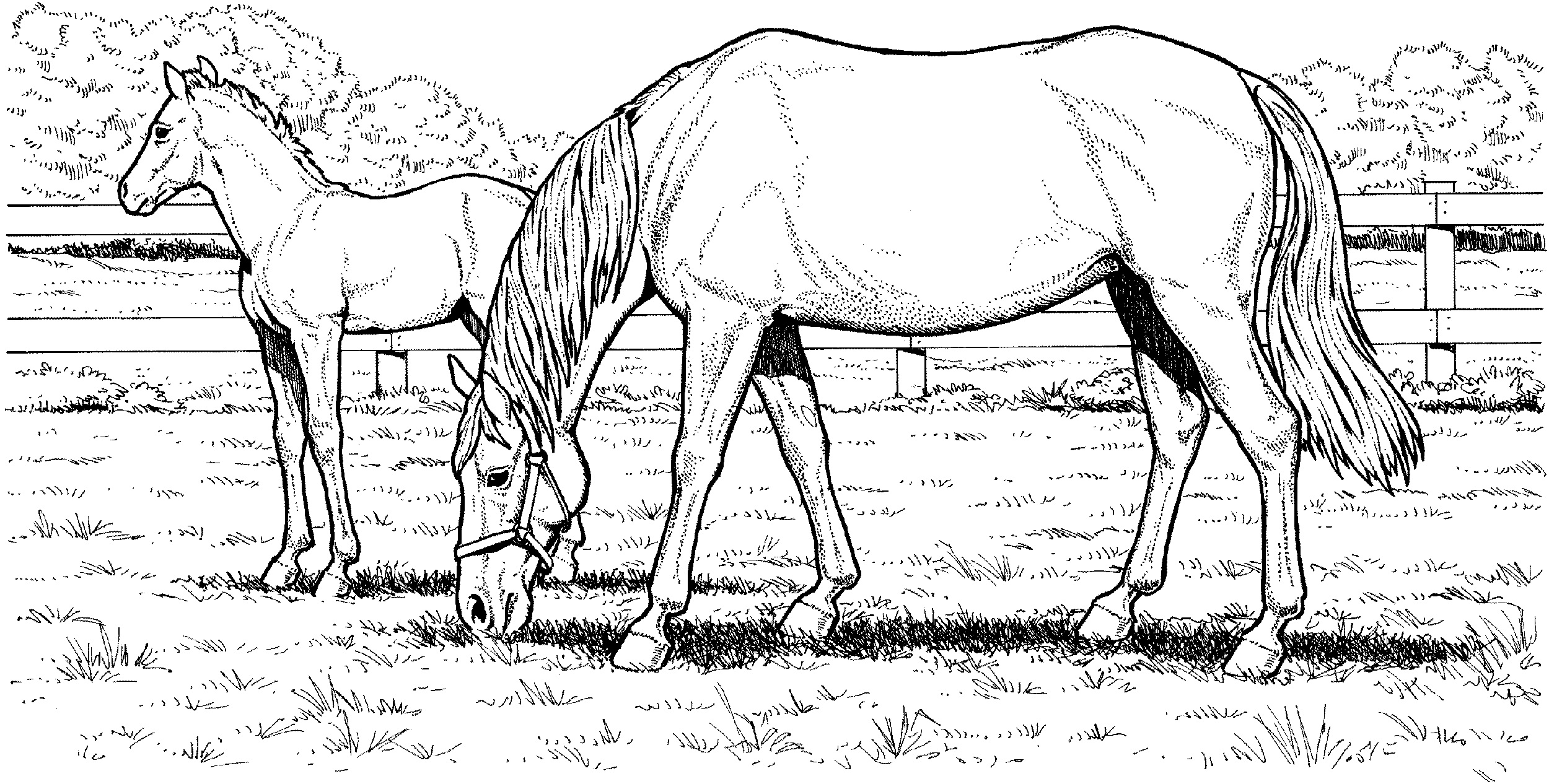 horse pages 30 printable horse coloring pages pages horse