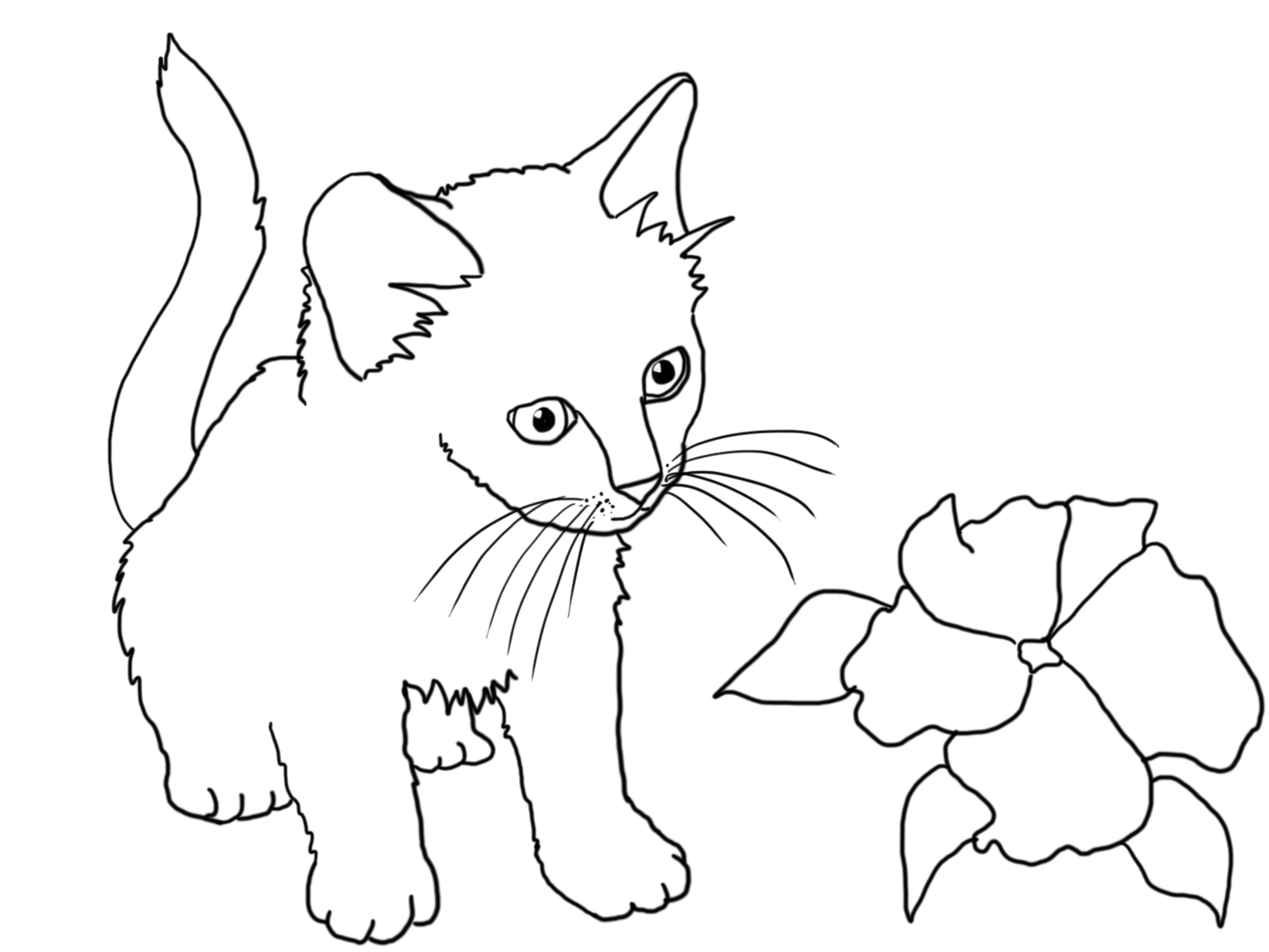 kitten coloring cat coloring pages kitten coloring 1 1