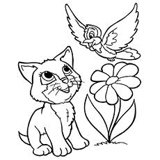 kitten coloring coloring ville coloring kitten