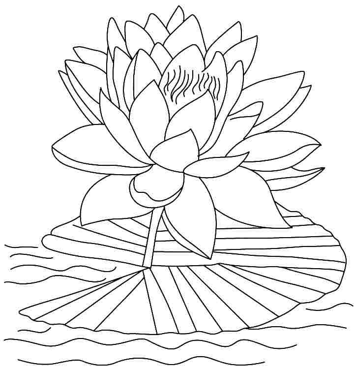lotus flower coloring page a lotus flower lotus flowers have long thin petals rise flower coloring lotus page