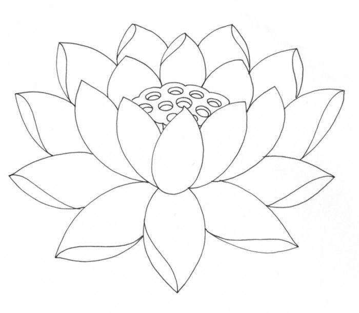 lotus flower coloring page free printable lotus coloring pages for kids coloring flower page lotus