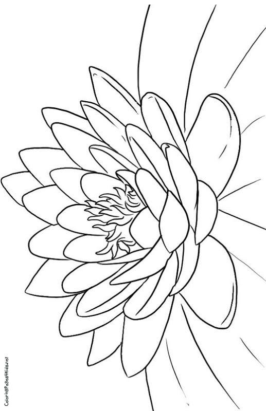 lotus flower coloring page free printable lotus coloring pages for kids coloring lotus page flower