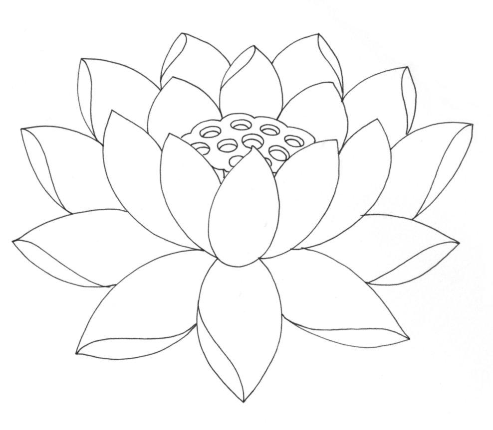 lotus flower coloring page free printable lotus coloring pages for kids flower lotus coloring page