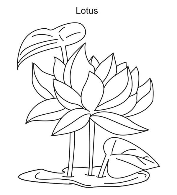 lotus flower coloring page free printable lotus coloring pages for kids flower lotus coloring page 1 1
