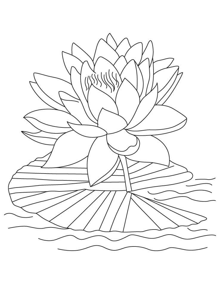 lotus flower coloring page free printable lotus coloring pages for kids page coloring lotus flower