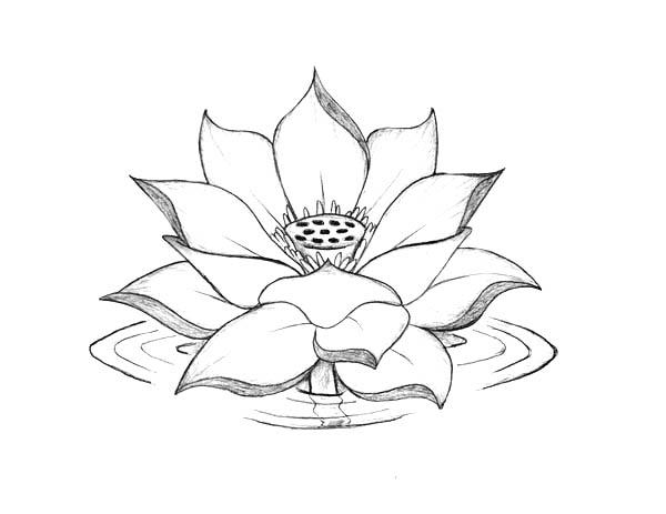 lotus flower coloring page free printable lotus coloring pages for kids page coloring lotus flower 1 1