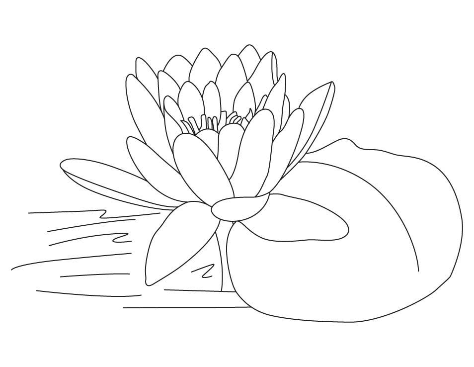 lotus flower coloring page free printable lotus coloring pages for kids page lotus flower coloring 1 1