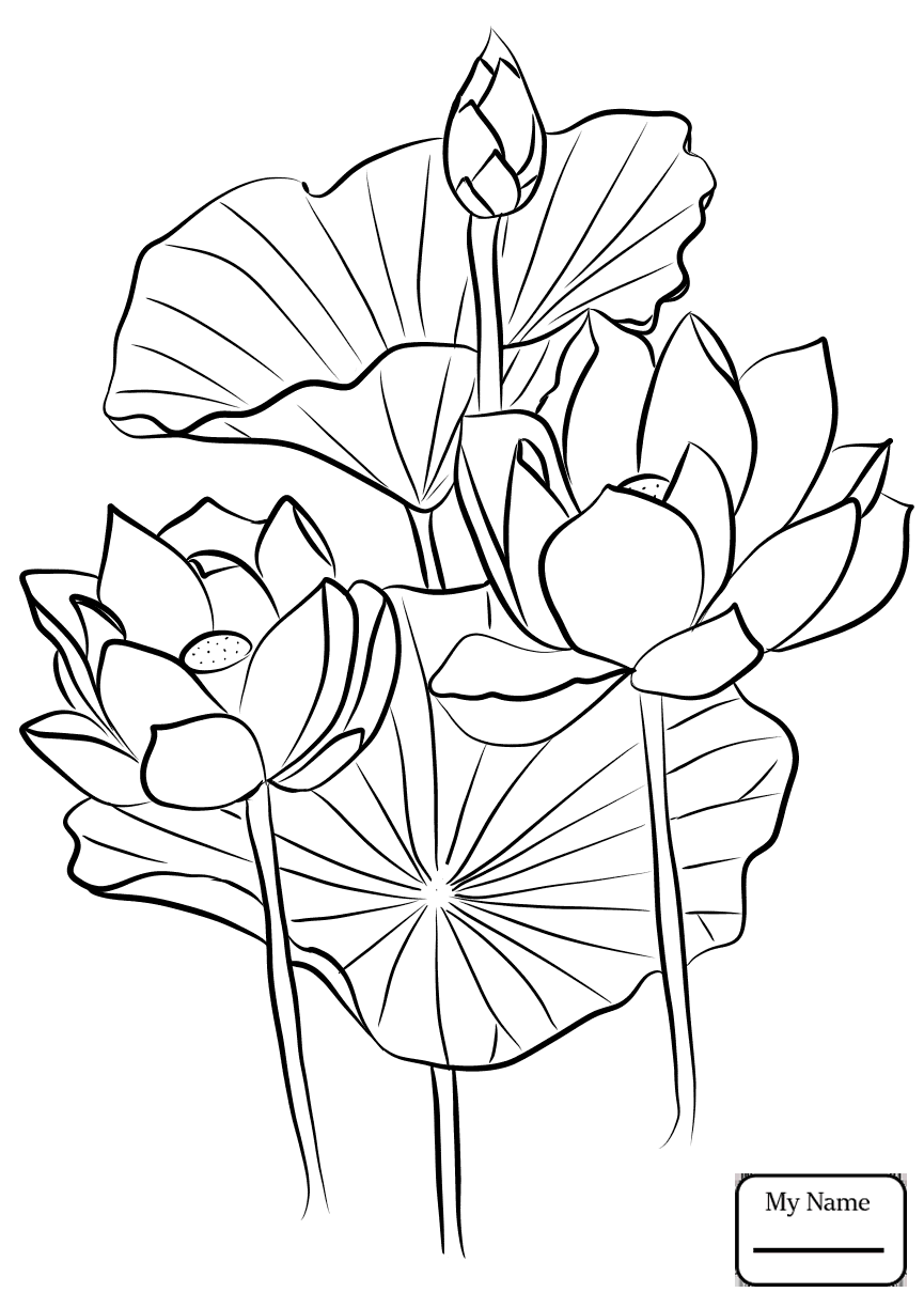 lotus flower coloring page lotus colouring page by welshpixie on deviantart flower coloring lotus page
