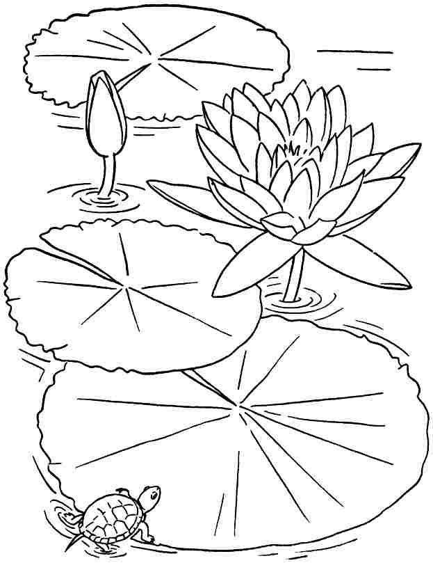 lotus flower coloring page lotus flower coloring page coloring flower lotus page