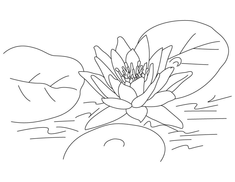 lotus flower coloring page lotus flower coloring page flower coloring page lotus page coloring flower